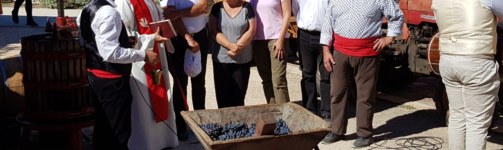 vendanges traditionnelles au domaine